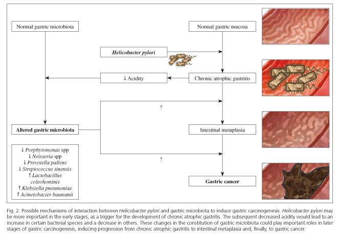 Gastric Microbiota And Carcinogenesis The Role Of Non Helicobacter Pylori Bacteria A Systematic Review